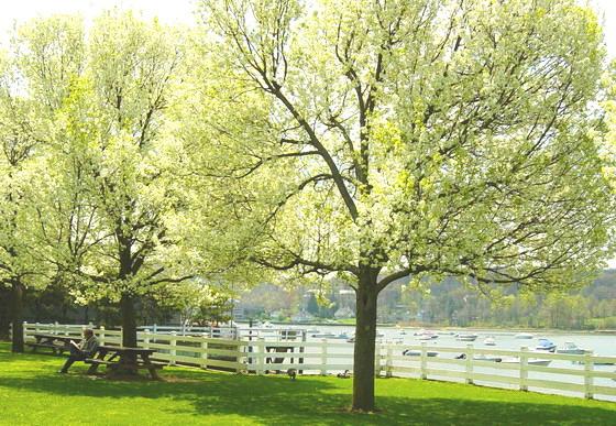 Sunshine and Blossoms/Brian Crain